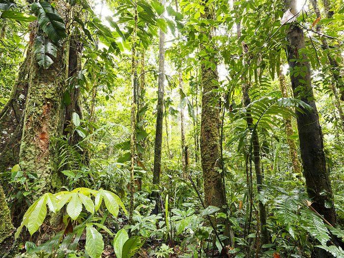 Amazon Basin in Ecuador