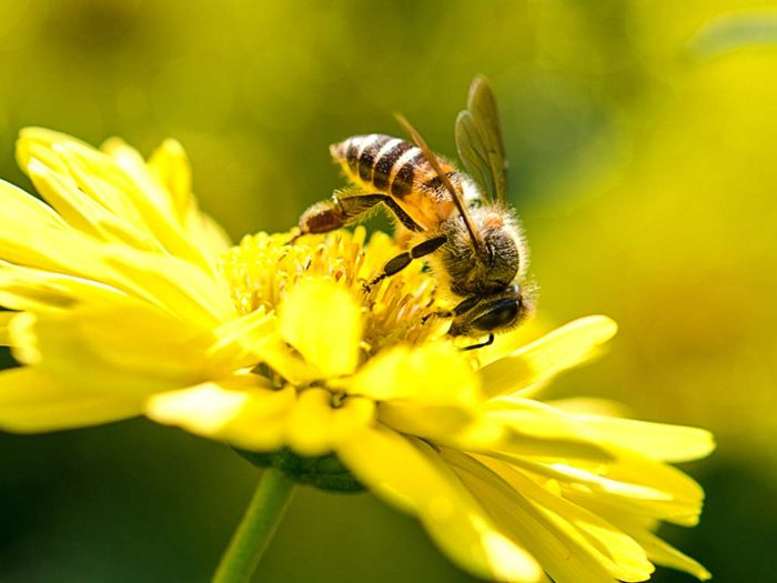 Bee with flower on sunny day