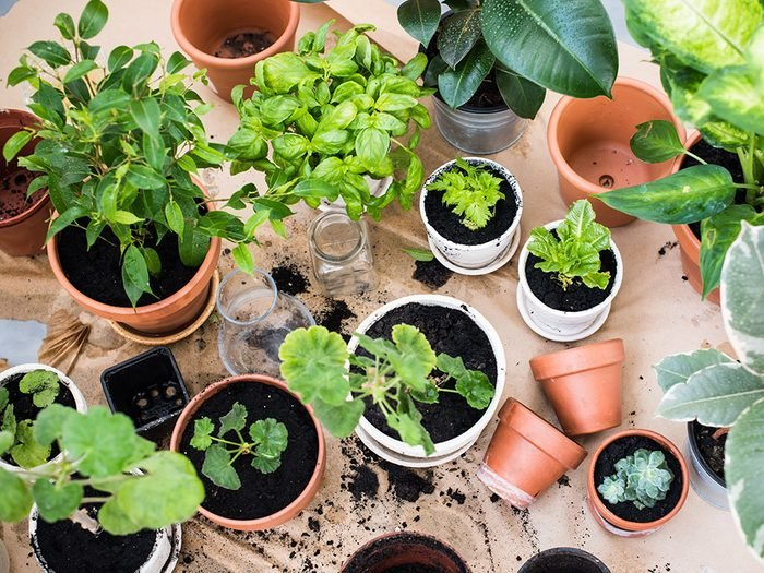 Small potted plants