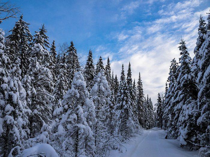 Winter forest in Quebec