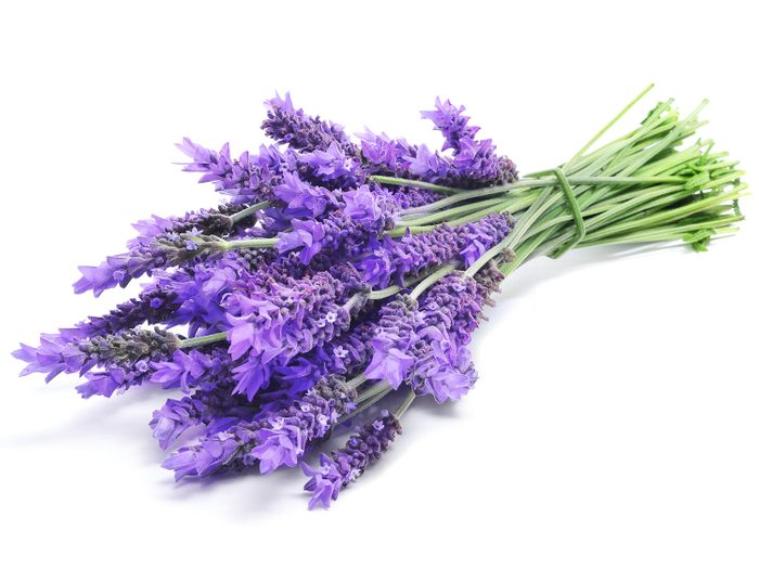 Healing lavender
