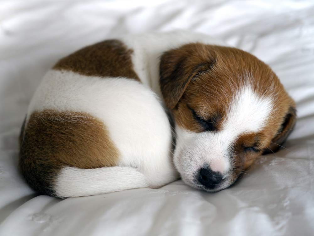 6 Facts to Know Before Owning a Puppy