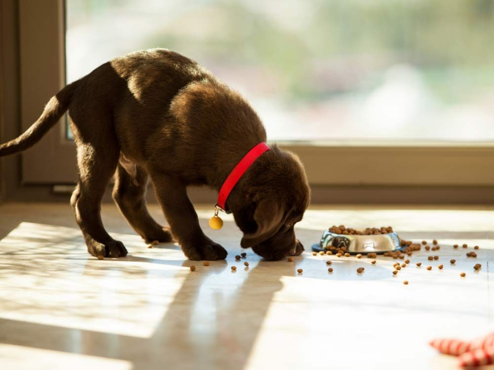 Owning a Puppy Costs Money