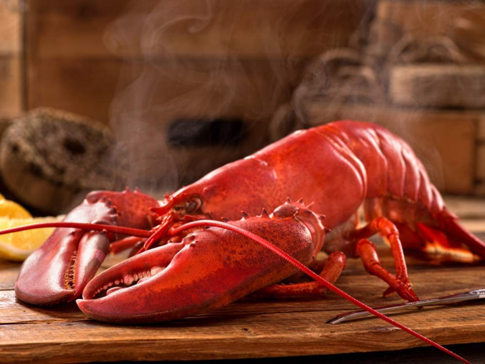 Freshly steamed lobster