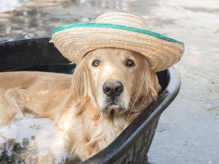 Dog soaking in tub
