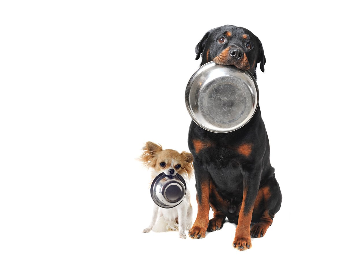 Homemade dog biscuit recipe - hungry dogs