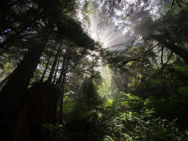 Sun through morning fog on the West Coast Trail, Vancouver Island