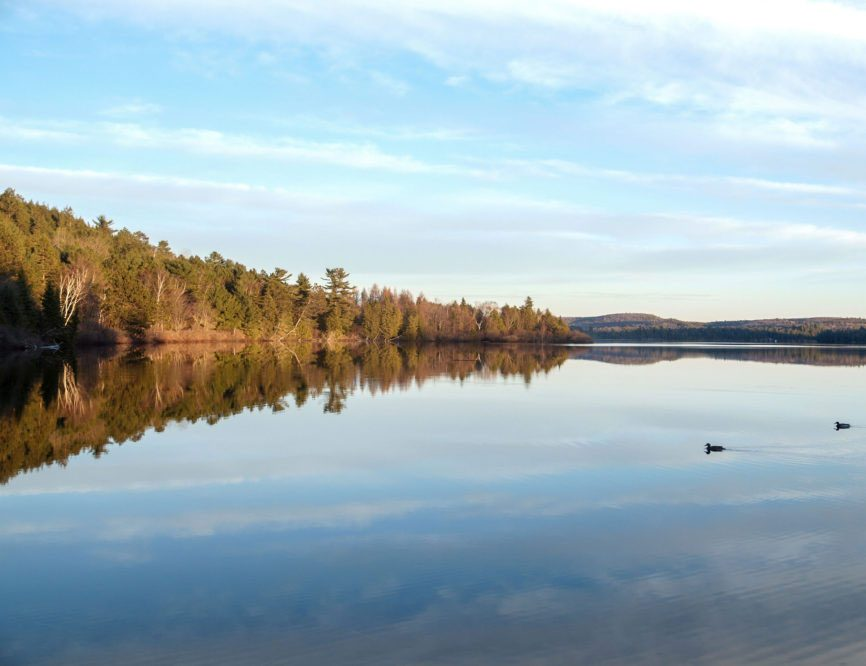 Wolf howls at Algonquin Park is one of the essential things to do in Ontario