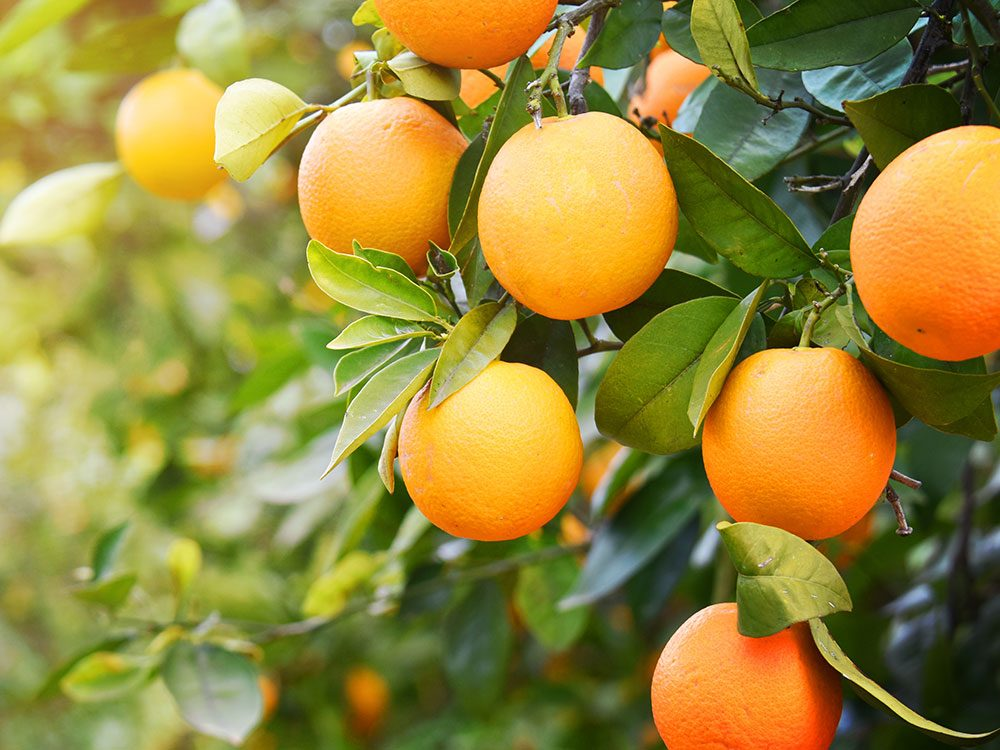 Essential vitamins your body needs: Vitamin C from oranges