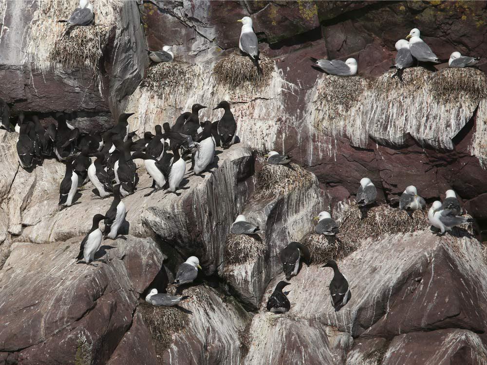 Cape St Mary's Ecological Reserve, Newfoundland