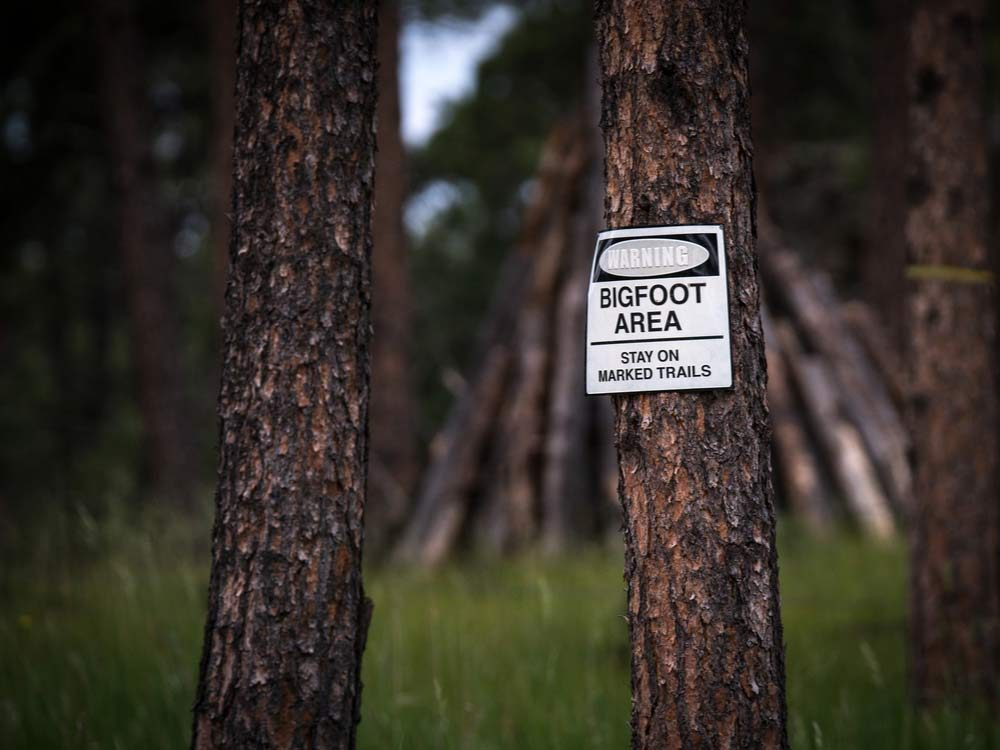 Bigfoot warning in wooded area