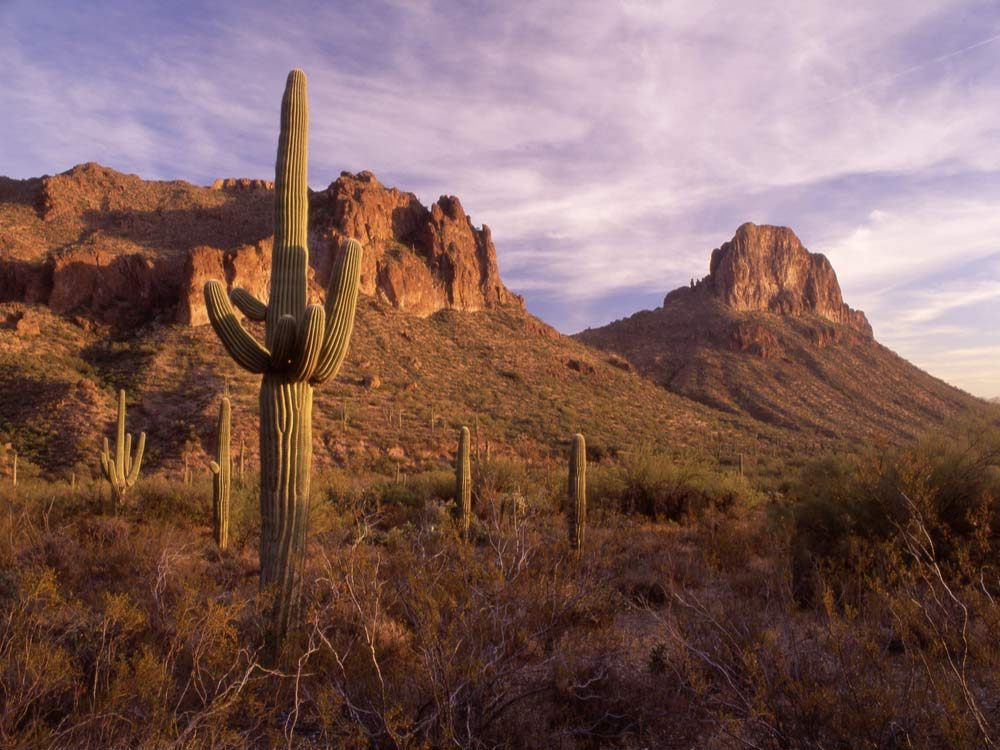 Mexican desert landscape