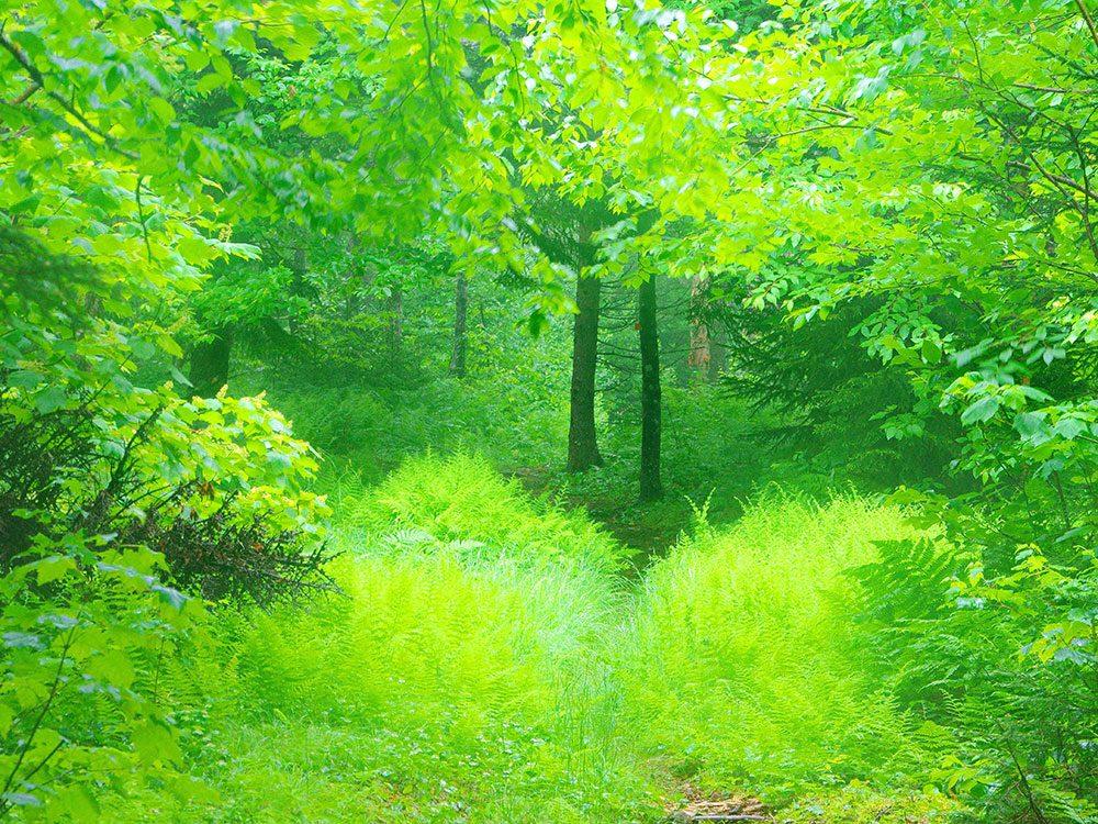 Cape Chignecto Trail