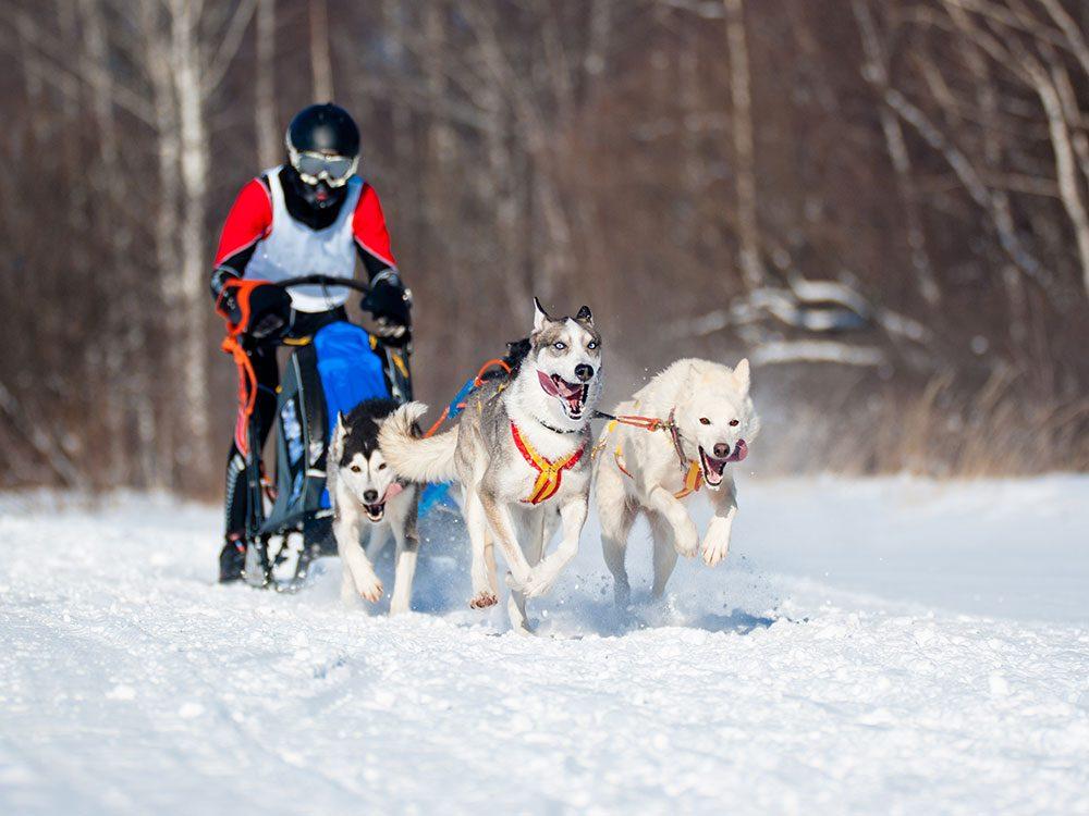 Dogsledding in Canada's Yukon Territory