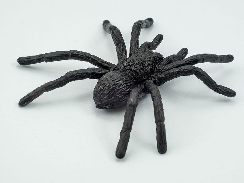 Black spider toy