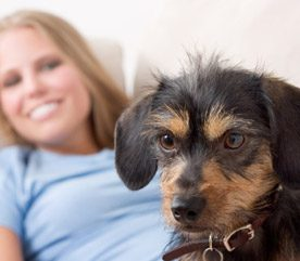 12 Pet Safety Tips