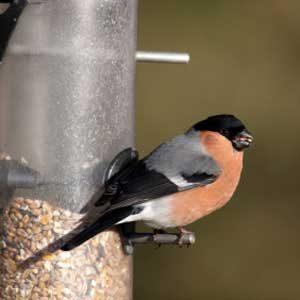 2. Feed the Birds