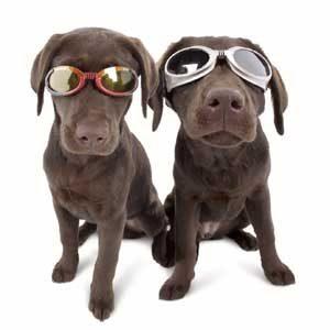 2. Doggles