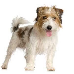 3. Do Away with Doggy Odour