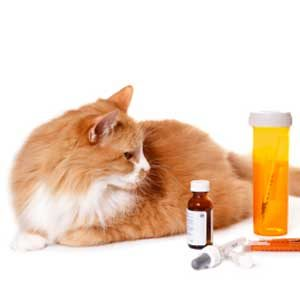 3. Supplements and Medications