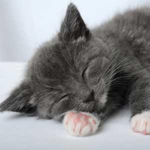 5. Cat Naps Too Long