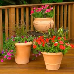 Protect Potted Plants