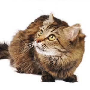 2. Scaredy Cat
