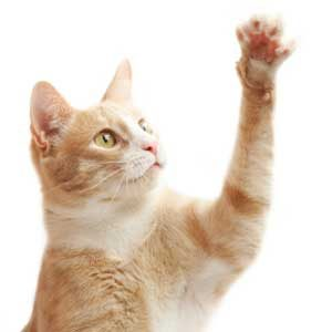 4. Deter Cats From Scratching