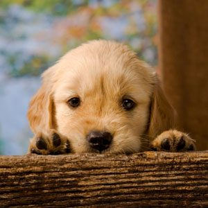 2. Questions About Dogs: Socializing a Shy Dog