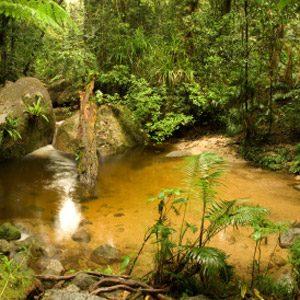 2. Daintree National Park, Australia