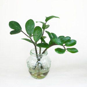 2. Keep Root Water Fresh