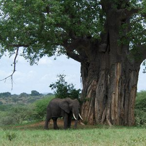 3. Kenya and Tanzania