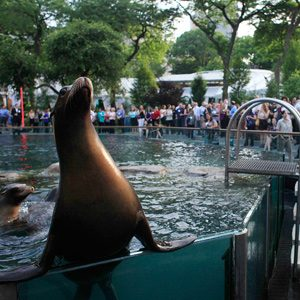 5. What to Do With Kids in New York: Central Park Zoo