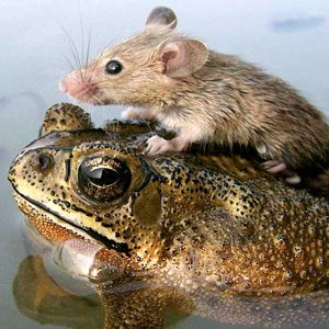 Guinea Pigs, Mice and Frogs Oh My!