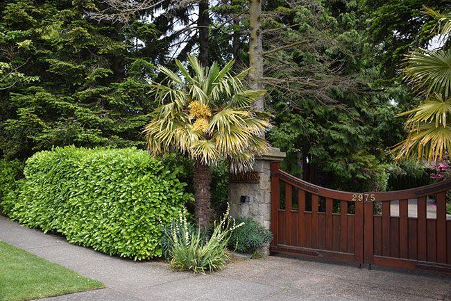 Palm Trees in Oak Bay