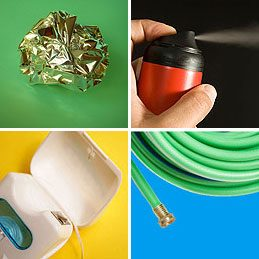 Things to Do With Tea