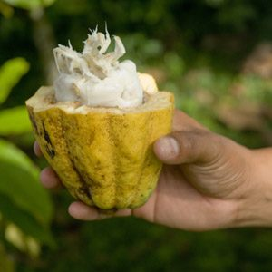 Delicious spring break family vacations: Chocolate Week, Belize