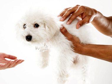 Secrets of pets #3: