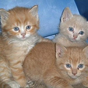 Kittens by Brenda Valen