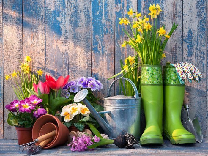 1. Start Your Garden With Good Soil