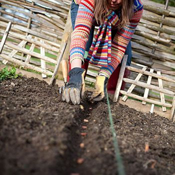 1. Sowing the Seeds