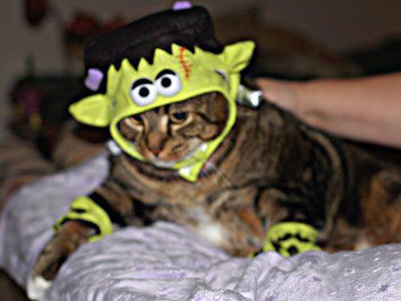 Frankenstein Kitty