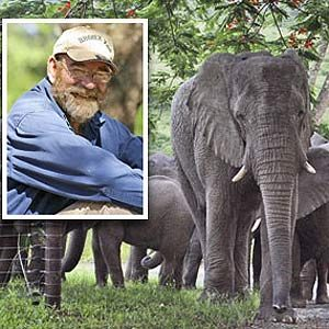 2. The Mournful Elephant Herd