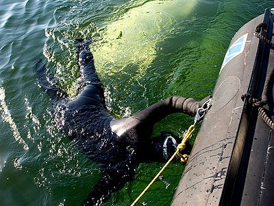 Things To Do in Churchill: Snorkel with Beluga Whales