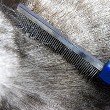 What Grooming Equipment Do I Need?