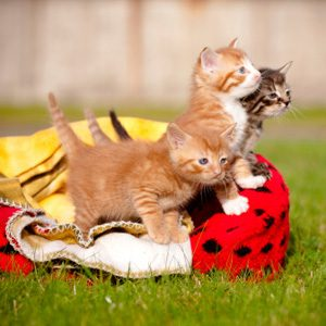 What You May Not Know About Cats: Cats Learn To Purr Quickly