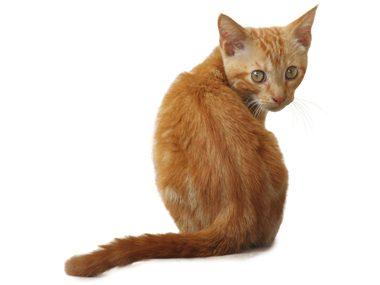 Secret life of cats #34: