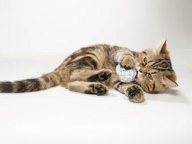 Cat care tips #35: