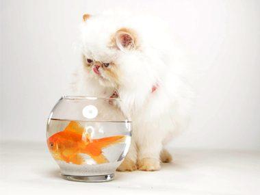 Pet training advice #36: