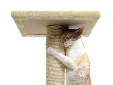 Cat care tips #38: